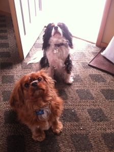 Opie and Louie loved the sunshine today, in the middle of a Michigan winter, no less! The sun was good for us all!