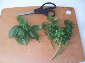 Small handfuls of fresh basil and fragrant cilantro, both cut just minutes ago from my chemical-free container herb garden!